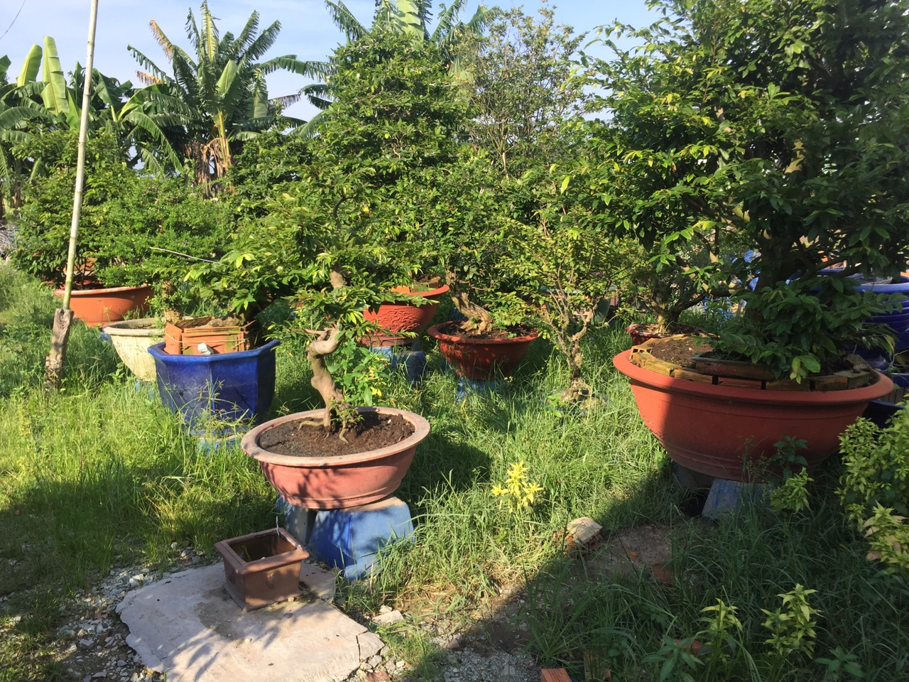 Chăm sóc, cải tạo hệ thống cây xanh